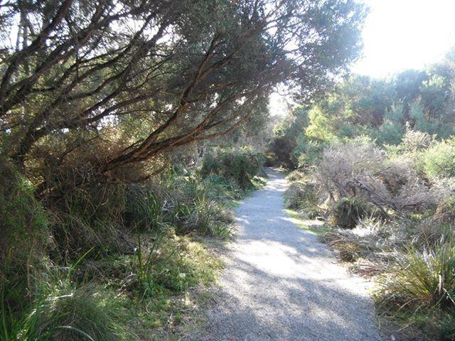 Swan Lake Reserve -PICS