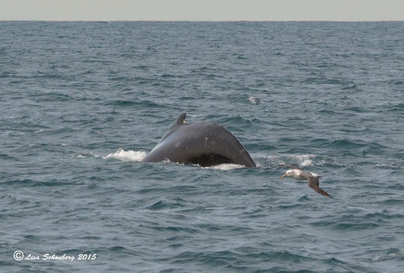 Whale & Albatross by LIsa Schonberg - PICS Victoria